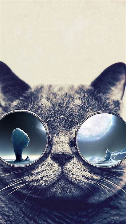 Cool Cat Iphone Wallpapers Glasses Grumpy Cats