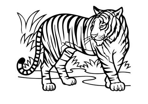 tigre da disegnare per bambini tigri 3 disegni per bambini da colorare