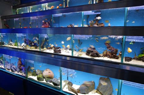 how to store fish aquarium store uk visit our london shop for aquariums fish tanks marine tropical 2017