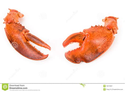 Lobster Claw Stock Image Image Of Isolated, Seafood