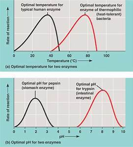 Enzyme Activity Html 08 18enzymeenvironfactors Jpg