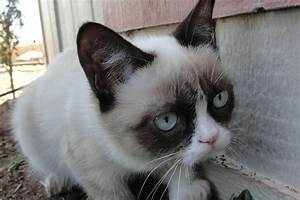 grumpy cat (Jan 09 2013 17:13:35) ~ Picture Gallery