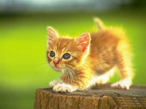 Cute Cats #5  Cute Cats