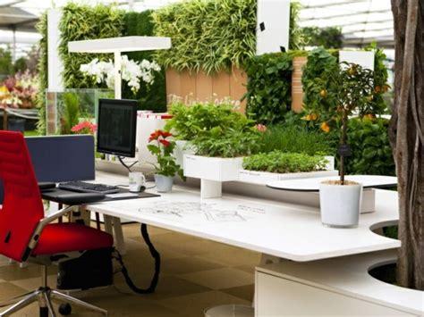 plantes pour bureau aménagement de plantes d 39 intérieur pour le bureau de travail
