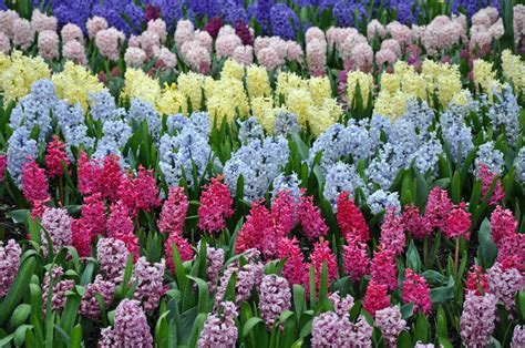 when do perennials return when do perennials return 28 images perennials simpson landscape your trusted source of