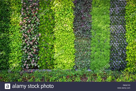 green plant background / pattern wall plant texture