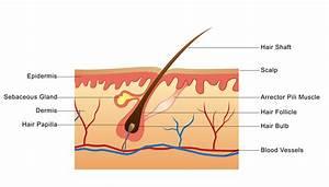 Understanding Hair Growth Basics - NJoy Essentials
