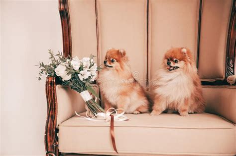 Wedding Couple And Dogs Stock Image Image Of Pets Dress