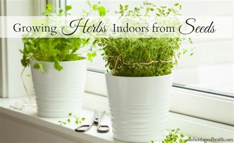 Growing Herbs Inside by Gardening Archives Our Heritage Of Health