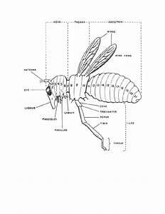 Figure 4-43  Diagram Of A Primitive Insect