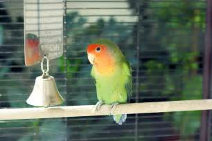 Types of Birds That You Can Have as Pets