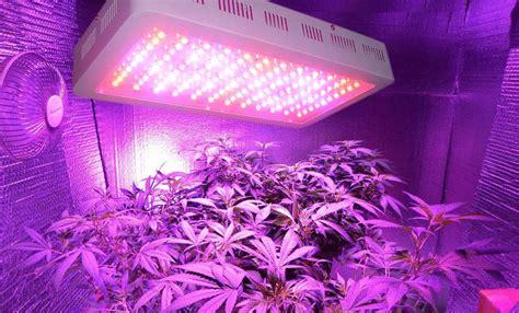best led grow light for the money led horticole cannabis graines de cannabis sous