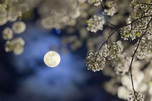 Jardiner Avec La Lune : comment jardiner avec la lune et le calendrier lunaire ~ Farleysfitness.com Idées de Décoration
