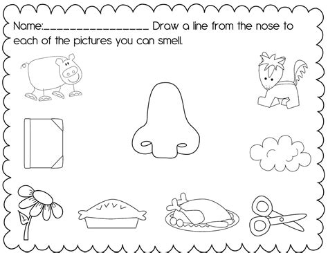 free coloring pages of five senses worksheet