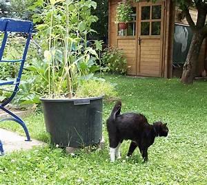 Katze Im Garten Begraben : katzen im garten abwehren ~ Lizthompson.info Haus und Dekorationen