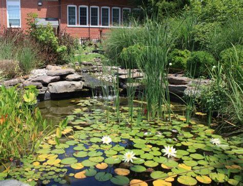 plante de bassin exterieur plantes aquatiques incontournables pour le bassin
