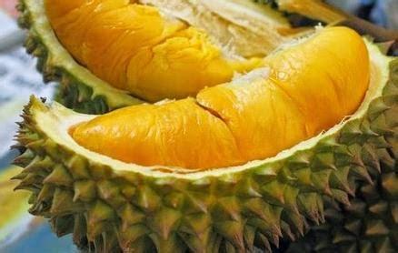 Hamil Muda Boleh Makan Durian Bolehkah Makan Durian Saat Hamil Muda Walaupun Sedikit