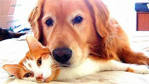 Dogs And Cats Playing Together  62