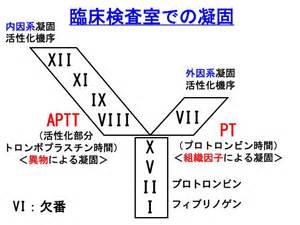 Aptt+And+PT 凝固カスケード(PT&APTT ... aPTT
