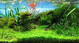 Aquarium Dekorieren Ideen : der nano cube ein aquarium muss nicht teuer sein ~ Bigdaddyawards.com Haus und Dekorationen