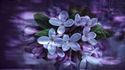 Petals Lilac Reflection Wallpapers4u