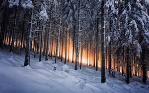 Winter Forest Sunshine HD Wallpaper - StylishHDWallpapers