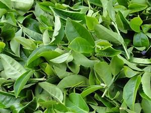 Tea - IDH - the sustainable trade initiative