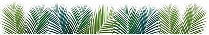 Palm Leaves Requests Prayer Invitations Event Latest