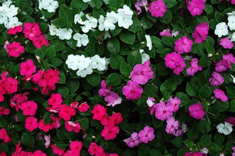 common perennial flowers common perennial flowers landscapers talk local blog