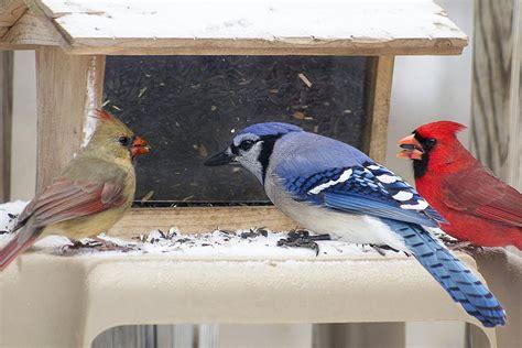 tips for feeding birds in winter