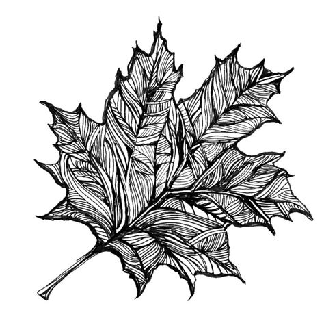 leaves drawing clipart