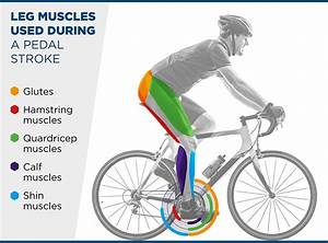 Which Muscles Are Used In Cycling
