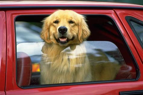 dog  car window pee whiz blog