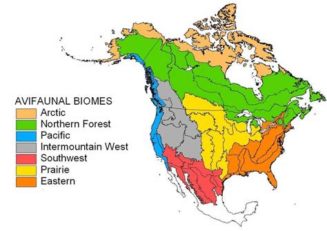 Avifaunal Biomes In North America In Canada, The Northern Forest  Download Scientific Diagram