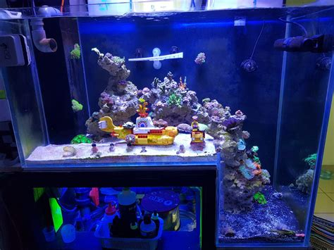 saltwater tank lights reef aquarium from malaysia orphek led aquarium