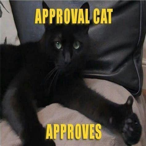 Cat Pic Meme - cat memes 2016 related keywords cat memes 2016 long tail keywords keywordsking