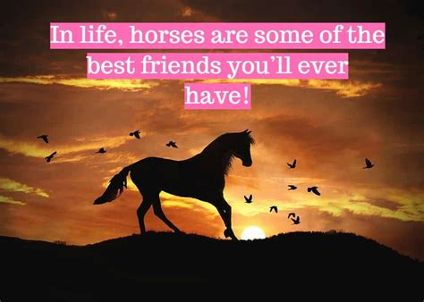 horse quotes short helpful heaven welcome isn quotesplant inspiration there