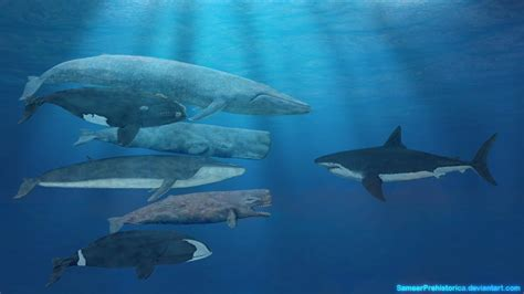 Whales And Megalodon..