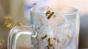 Was Vertreibt Wespen : zehn hausmittel zum schutz vor wespen ~ Articles-book.com Haus und Dekorationen