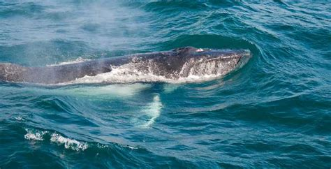 San Diego Boat Tours Groupon by Southern California Whale Tours Discounts