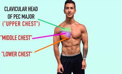 Read here everything about its anatomy. Untere Brust trainieren - TOP 3 Übungen für mehr Masse ...