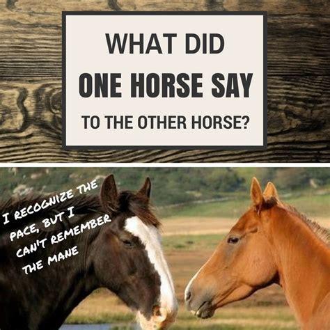 jokes horse funny joke horses puns equestrian racing did say humor pony riding jumping barrel horseback vettec visit