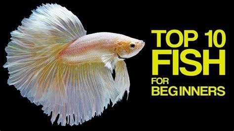 good fish  aquariums