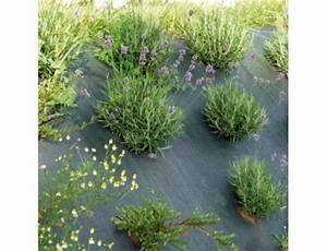 Toile De Jardin : toile de paillage 86g m x 100 m paillage jardin bache de sol ~ Teatrodelosmanantiales.com Idées de Décoration
