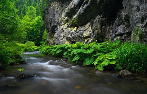 steinachtal forum fuer naturfotografen