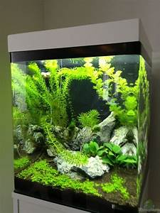 Aquarium Einrichten 60l : aquarium 60l ~ Michelbontemps.com Haus und Dekorationen