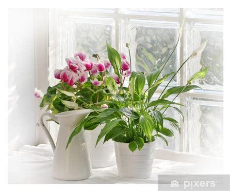 fiori da davanzale adesivo fiori sul davanzale pixers 174 viviamo per il