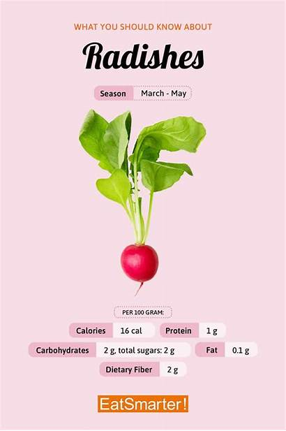 Radish Nutritious However Vegetable Texture Might Below