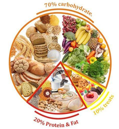 balanced diet   topper