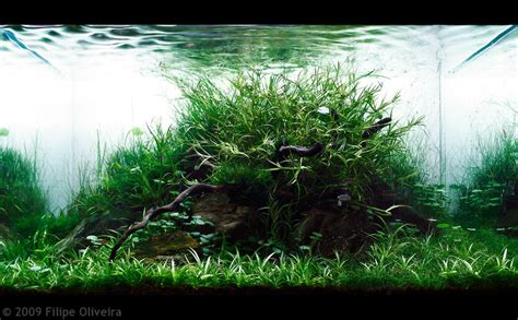 Aga Aquascaping by Aga Aquascaping Contest Delivers Stunning Freshwater Views
